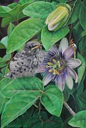 Passionflower Prints - A Passion For Adventure Print by Macon Leslie