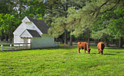 Split Rail Fence Framed Prints - A Pastoral Scene at Williamsburg Framed Print by Dave Mills