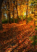 Autumn Scenes Metal Prints - A Path Of Gold 2 Metal Print by Mel Steinhauer