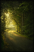 Woods Framed Prints - A Path To The Light Framed Print by Evelina Kremsdorf