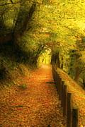 Tim Ernst - A path well chosen