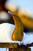 Food And Beverage Photo Originals - A pear in snow by Tommy Hammarsten