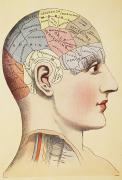 Traits Prints - A Phrenological Map Of The Human Brain Print by Ken Welsh