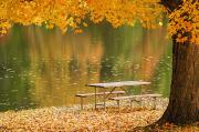 Fallen Leaf Lake Posters - A Picnic Table Beside A Tranquil Lake Poster by Tom Patrick