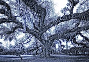 Live Oaks Digital Art Framed Prints - A Place for Dying blue Framed Print by Steve Harrington