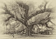 Live Oaks Digital Art Framed Prints - A Place for Dying sepia Framed Print by Steve Harrington