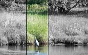 Daryl Macintyre - A Pond Moment