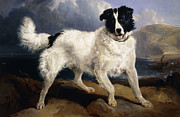 Domestic Pet Portrait Prints - A Portrait of Neptune Print by Sir Edwin Landseer
