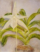 Botanical Pastels Originals - A Portrait of the Star of Bethlehem Orchid by Barbara Smeaton