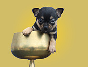 Chihuahua Originals - A Pup In A Cup by Carolyn Fletcher