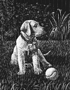 Ball Drawings Posters - A Puppy With The Ball Poster by Irina Sztukowski