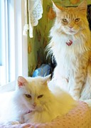 Judy Via-Wolff - A Purrfect Couple