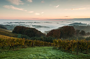 Vineyard Landscape Art - A quiet morning on the hill by Davorin Mance