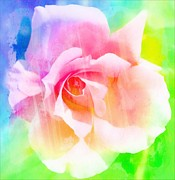 Portland Photography Framed Prints - A Rainbow of a Rose Framed Print by Cathie Tyler