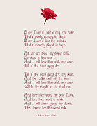 John Tidball  - A Red Red Rose With...