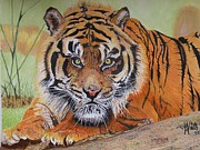 Alan Webb - A restful Tiger