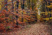 Fall Photos Prints - A Road Less Traveled Print by Skip Willits