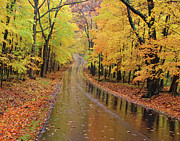 Indiana Autumn Digital Art Prints - A Road Not Taken Print by William Howard