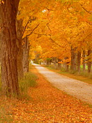 Autumn In The Country Metal Prints - A Romantic Country Walk In The Fall Metal Print by Lingfai Leung
