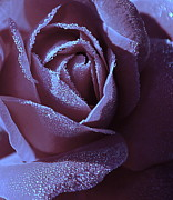 Sparkling Rose Art - A Rose That Glitters by Michelle Ayn Potter