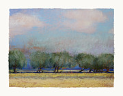 Evening Sky Pastels - A Row of Olive Trees by Diana Jahns