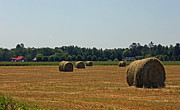 Hay Bales Framed Prints - A Rural Carolina Scenic Framed Print by Suzanne Gaff