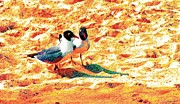 Seacapes Prints - A Seagull Couple Print by Annie Zeno