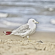 Teresa Jacobs Metal Prints - A Seagulls Life Metal Print by Teresa Jacobs