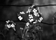 Phlox Digital Art Framed Prints - A Secret Place monochrome Framed Print by Steve Harrington