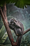 Zoos Framed Prints - A Sense of Sadness Framed Print by Karol  Livote