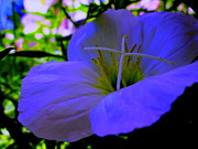 Photo Flowers - A Shady Deal by Allen n Lehman