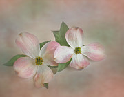 Dogwood Blossom Metal Prints - A Sign of Spring Metal Print by David and Carol Kelly