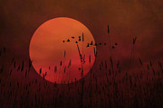 Canvas Cat Prints Prints - A Simple Sunset In June Print by Thomas York