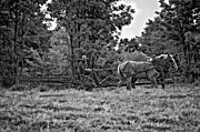 Amish Photography Posters - A Simpler Time bw Poster by Steve Harrington
