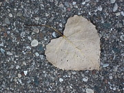 Guy Ricketts Photography Photos - A Single Leaf by Guy Ricketts
