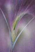 Texture Floral Metal Prints - A Single Whisper Metal Print by Priska Wettstein