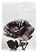 Sherry Hallemeier Prints - A Sketch of a Rose Print by Sherry Hallemeier