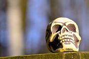 A Skull In Color Print by Tommy Hammarsten