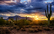 The Supes Prints - A Sonoran Desert Sunrise Print by Saija  Lehtonen
