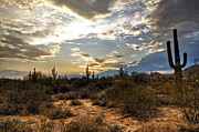 Silhouettes Metal Prints - A Sonoran Desert Sunset  Metal Print by Saija  Lehtonen