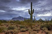Saija  Lehtonen - A Sonoran Evening