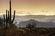 The Supes Prints - A Sonoran Morning  Print by Saija  Lehtonen