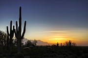 Saguaro Cactus Framed Prints - A Sonoran Sunrise  Framed Print by Saija  Lehtonen