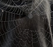 Michael Sokalski - A Spiders Web