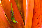 Lizard Art - A Splash of Color by Hastings Franks