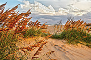 Sea Oats Framed Prints - A Splendid Day at the Beach - Outer Banks Framed Print by Dan Carmichael