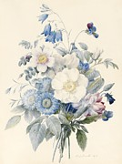 Wild-flower Drawings Posters - A Spray of Summer Flowers Poster by Louise D Orleans