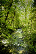 Green Foliage Posters - A Spring Day At Lithia Creek Poster by Diane Schuster