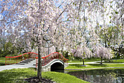 Blooming Trees Posters - A spring walk Poster by Paul W Faust -  Impressions of Light