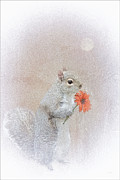 Winter Prints Photos - A Squirrel In Love by Tom York